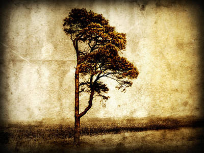 Lone Tree Poster by Julie Hamilton