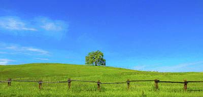 Lone Tree On A Hill Digital Art Poster