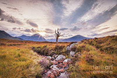 Lone Tree On Rannoch Moor In Scotland Poster by Colin and Linda McKie