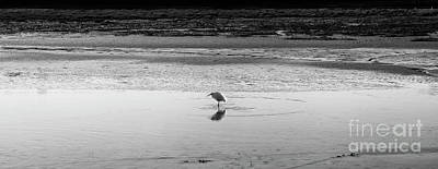 Poster featuring the photograph Lonely Heron by Nicholas Burningham