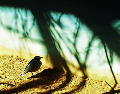 Poster featuring the photograph Lonely Little Bird by Shawna Rowe