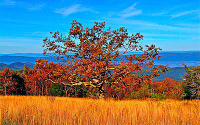 Lonely Tree Skyline Drive Va Poster by The American Shutterbug Society