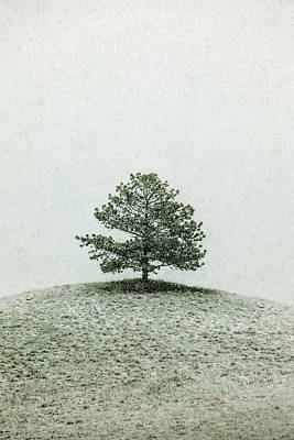Lonesome Tree Stands Alone In A Snow Storm Poster by Todd Klassy