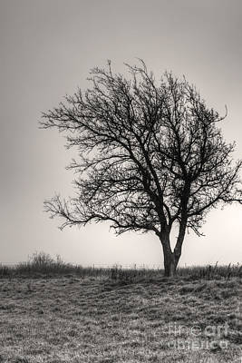 Poster featuring the photograph Lonesome Tree by Tamyra Ayles