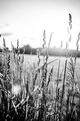 Long Grass In Black And White At Sunset Poster by Anthony Doudt