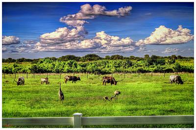Longhorns At The Ranch Poster