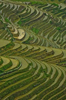 Longji Rice Fields Poster by Clipworks