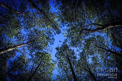 Look Up Tall Pine Tree Art Poster by Reid Callaway
