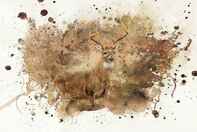 Looking For Her Deer Art Poster by Jai Johnson