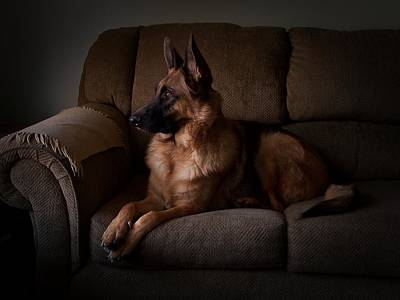 Looking Out The Window - German Shepherd Dog Poster