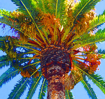 Looking Up At Palm Tree  Poster by Amy Vangsgard