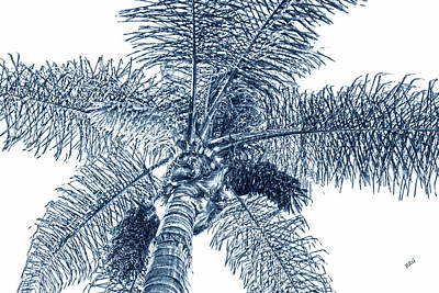 Looking Up At Palm Tree Blue Poster by Ben and Raisa Gertsberg