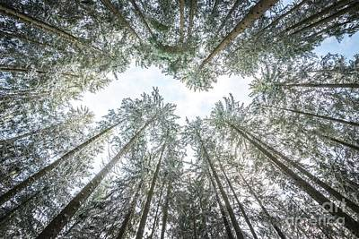 Poster featuring the photograph Looking Up In The Forest by Hannes Cmarits