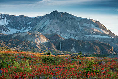Loowit Falls Mount St Helens Wildflowers Poster by Mike Reid