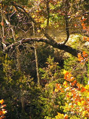 Lost Maples Scenery Poster by Joe Jake Pratt
