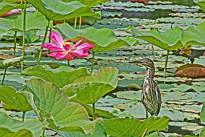 Lotus Blossom And Heron Poster