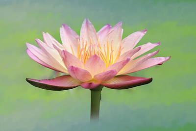 Lotus Flower Poster by Lori Deiter