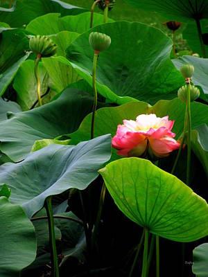 Lotus Forms Poster