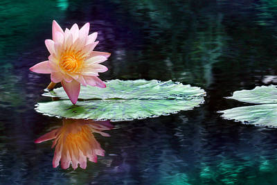 Lotus Reflection Poster by Lori Deiter