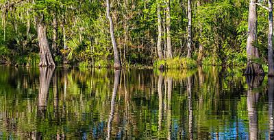 Louisiana Bayou 3  Poster by Steve Harrington