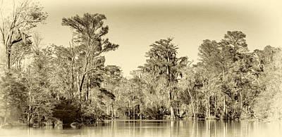 Louisiana Bayou 5 - Paint Sepia Poster by Steve Harrington