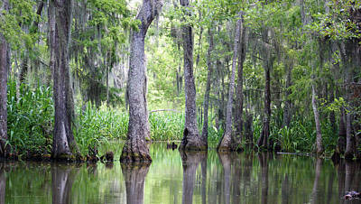 Louisiana Swamp 5 Poster by Inspirational Photo Creations Audrey Woods