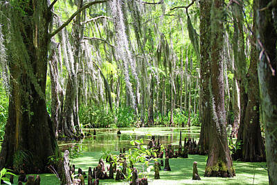 Louisiana Swamp Poster by Inspirational Photo Creations Audrey Woods