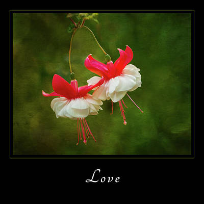 Poster featuring the photograph Love 1 by Mary Jo Allen