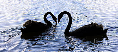 Love Birds On Swan Lake Poster by Jorgo Photography - Wall Art Gallery