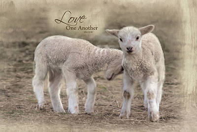 Poster featuring the photograph Love One Another by Robin-Lee Vieira