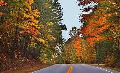 Lovely Autumn Trees Poster