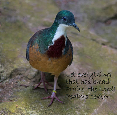 Lovely Bird, Praise The Lord Poster