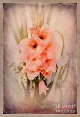 Lovely Gladiolus Poster