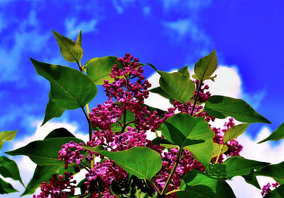 Lovely Lilac Blooms Poster by Alexas Fotos