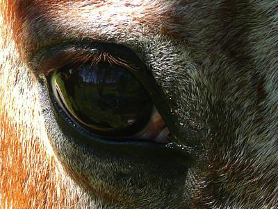 Loving Eye Poster