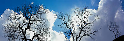 Low Angle View Of Trees Against Cloudy Poster