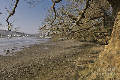 Low Spring Tide At Mylor Creek Poster by Terri Waters