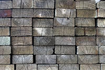 Lumber Wood Tree Grain Poster