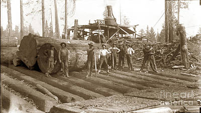 lumberjack with Redwood logs and steam donkey circa 1900 Poster by California Views Mr Pat Hathaway Archives