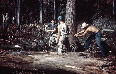 Lumberjacks At Work Poster by Paul Ward