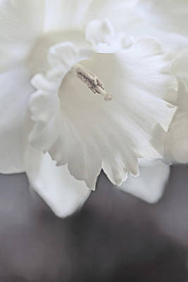 Poster featuring the photograph Luminous Ivory Daffodil Flower by Jennie Marie Schell