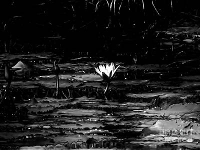 Luminous Water Lily  Poster