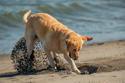 Luna Digs The Beach Poster