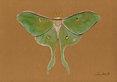 Luna Moth Poster by Juan Bosco