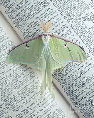 Luna Moth On Book Poster by Edward Fielding