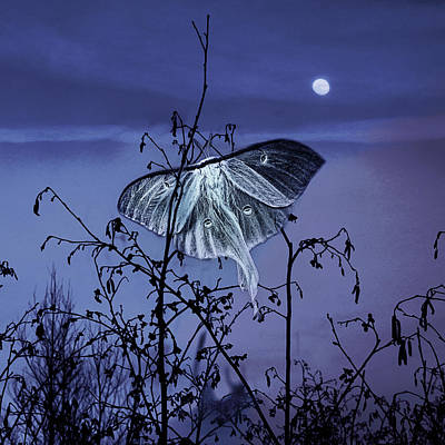 Luna Nights Poster