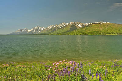 Lupines In The Tetons Poster