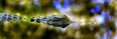 Lurking Gator Poster