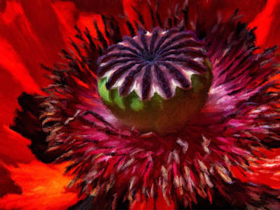 Luscious Red Poppy Art Poster by Georgiana Romanovna