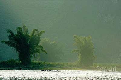 Lush Bamboo Trees On The Banks Of The Li Jiang River In Yangshuo Poster